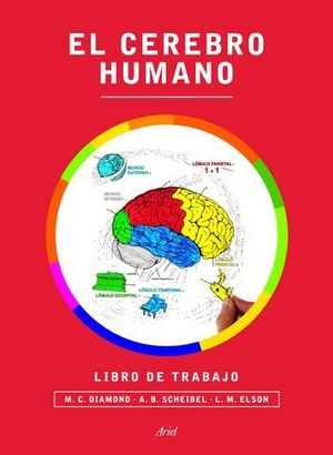 EL CEREBRO HUMANO LIBRO DE TRABAJO