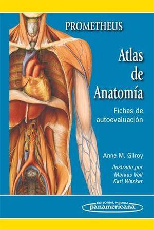 ATLAS DE ANATOMIA FICHAS DE AUTOEVALUACION